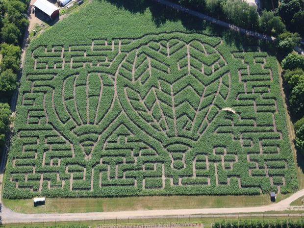Celebrate the (corn)Maze and Blue this Halloween